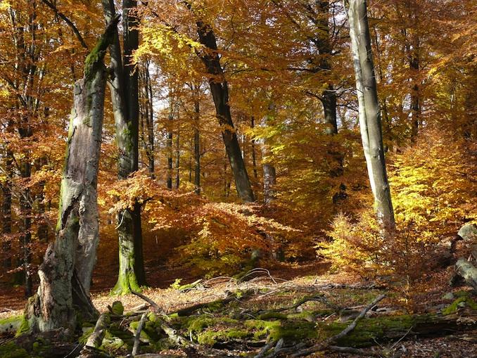 Der deutsche Wald © Greenpeace