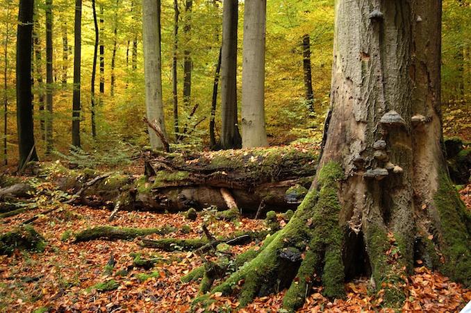 Ein idyllischer Waldabschnitt © Rüdiger Biehl Nationalpark Hainich
