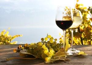 Bio-Weine sind im Trend.