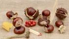Basteln mit Kastanien: Kreativer Familienspaß