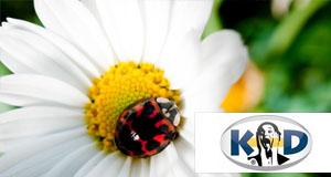 KD hat sich zu einer globalen Marke für Qualitätsprodukte für die visuelle Kommunikation entwickelt