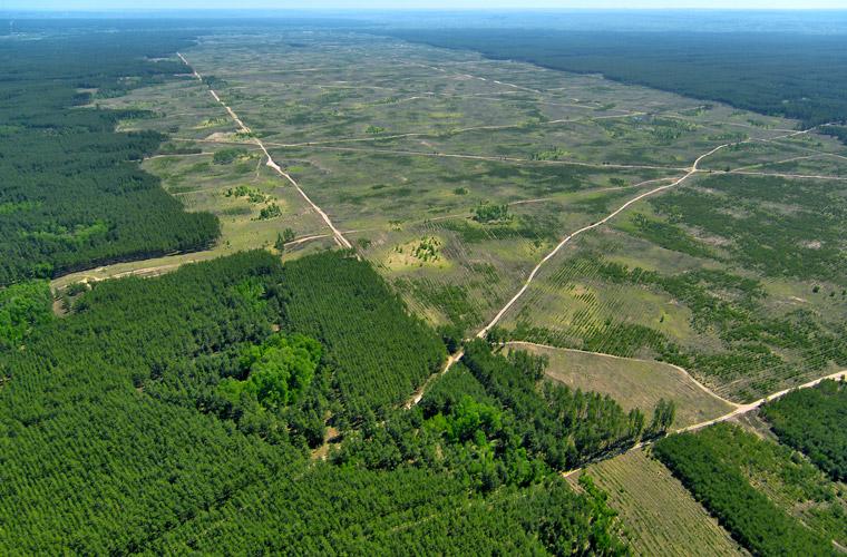 Rodung des Urwalds für Getreideanbau