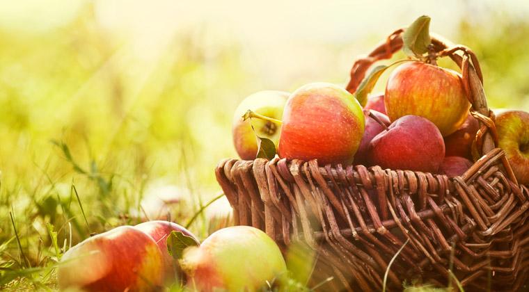 Äpfel regional und bio, Deutsche kaufen am liebsten bio