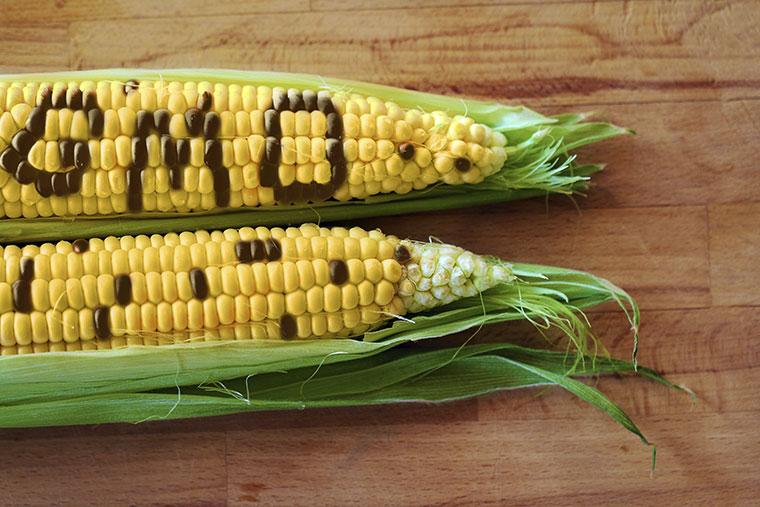 Stopp von gentechnisch veränderten Pflanzen