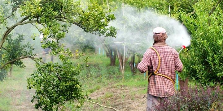 Monsanto fälscht Studien und Glyphosat wird als unbedenklich eingestuft!