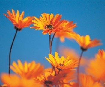 Gesundheitsgefahren durch Nicht-FairTrade-Blumen