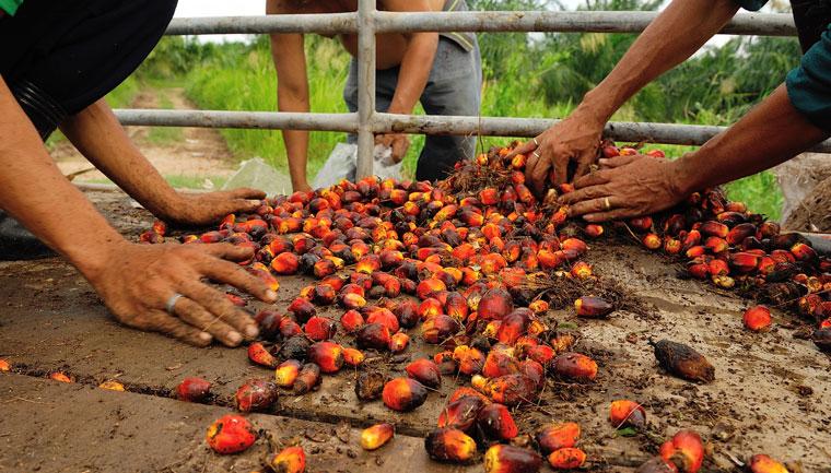 Herstellung Von Palmöl