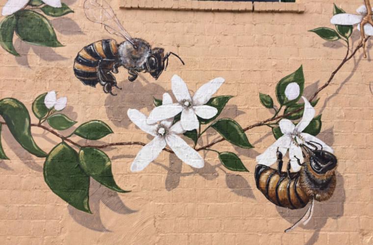 Bienensterben, amerikanischer Künstler