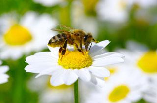 Keine Ausreden mehr. Schluss mit Pestiziden!