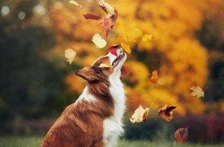 Neue und nachhaltige Wege mit Ihrem Hund gehen