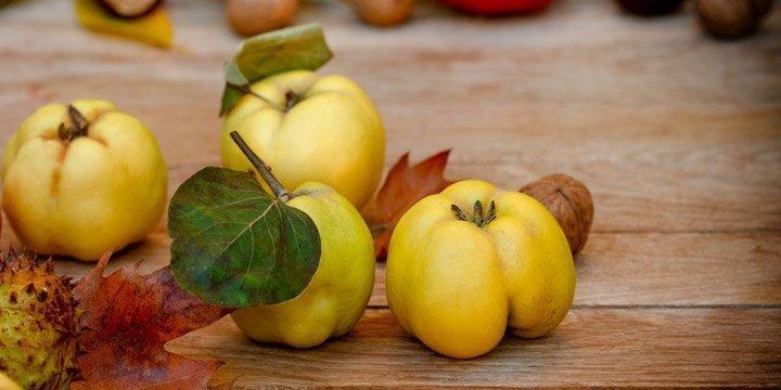 Die Quitte - Goldener Apfel mit großer Heilwirkung