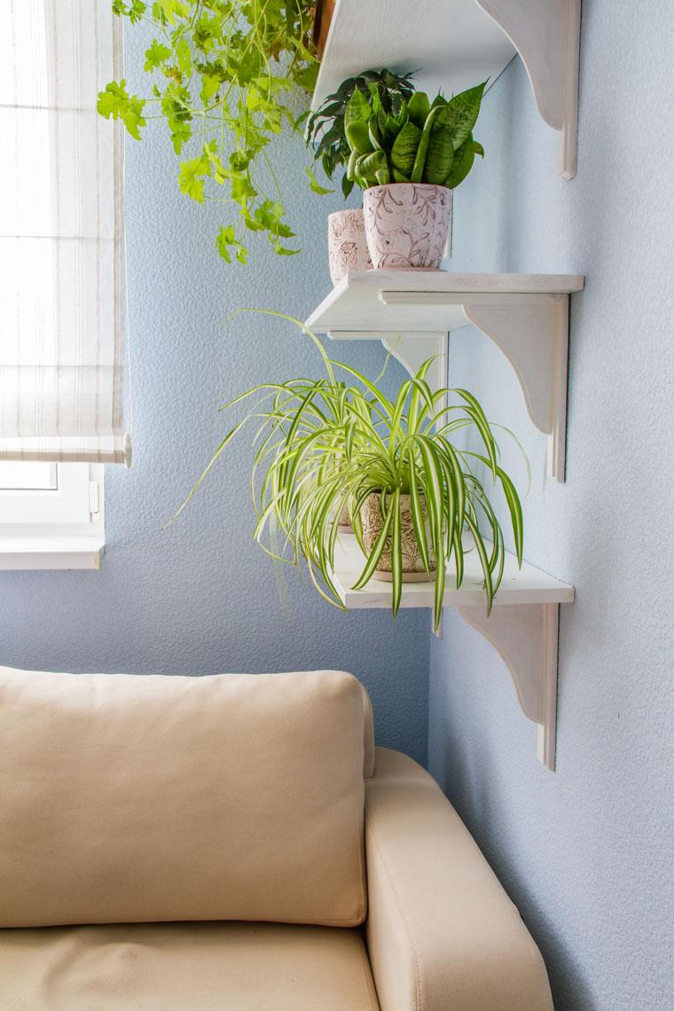 Mit ein paar Pflanzen das Raumklima verbessern
