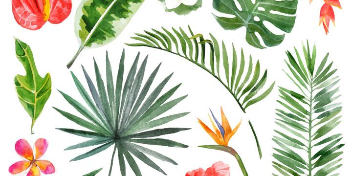 Diese pflegeleichten Pflanzen reinigen die Luft