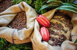 Edel-Schokolade aus der Heimat des Kakaos