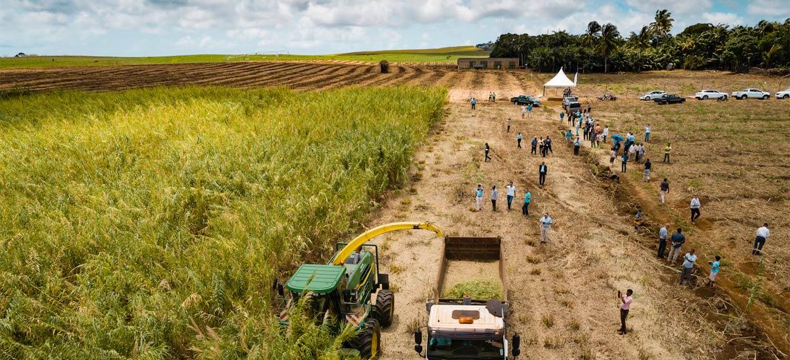 Eine grüne Revolution für Afrika: Energie ohne Kohle