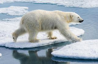 Umweltaktivistin gibt arktischen Riesen Hoffnung