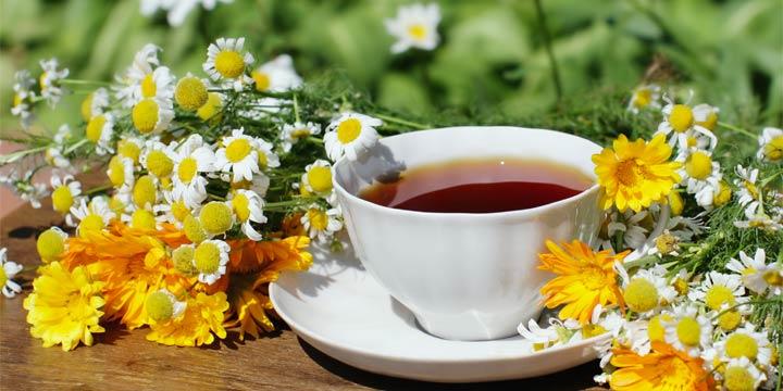 Heilpflanzen aus dem Garten: Tipps zur richtigen Anwendung