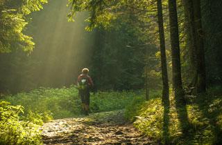 Die unsichtbare Heilkraft des Waldes