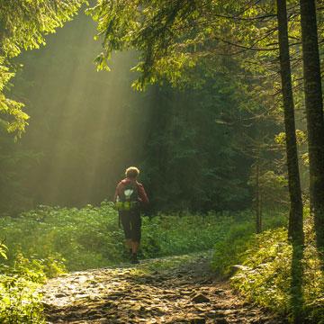 Ein Spaziergang im Wald als Heilmittel
