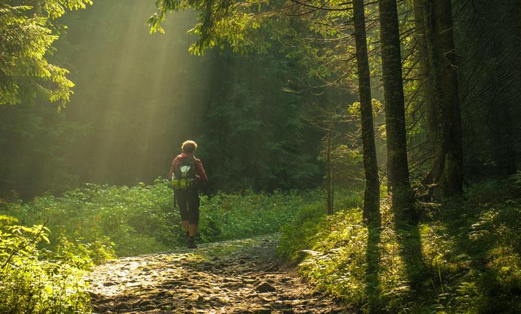 Die Natur wirkt Wunder gegen Stress