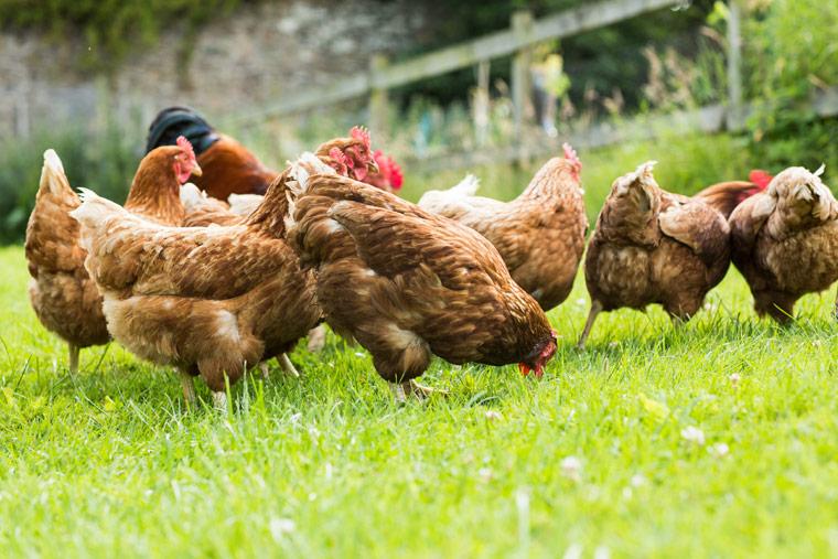 Wir brauchen eine verbindliche staatliche Kennzeichnung für alle tierischen Produkte