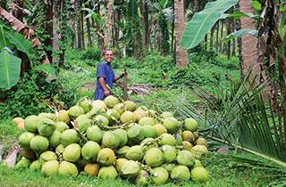 Kokosöl ist nicht gleich (Premium-) Kokosöl!