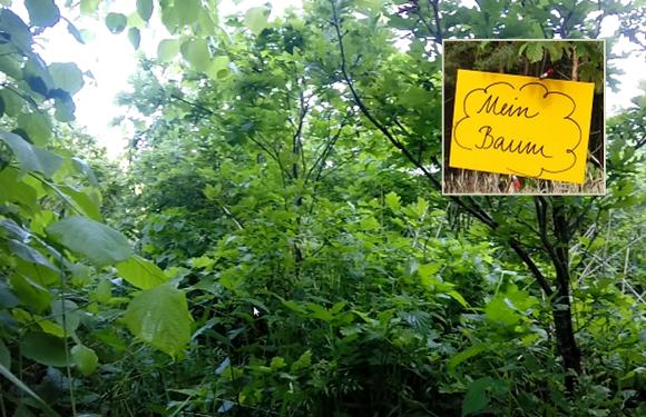 Baumpatenschaft baldwald: Ein Baum als Geschenk