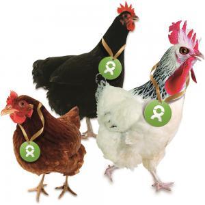Oxfam Gackernde Hühner