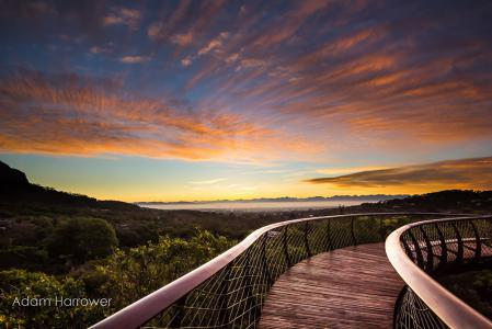 The Boomslang - Attraktion im Nationalpark Kirstenbosch
