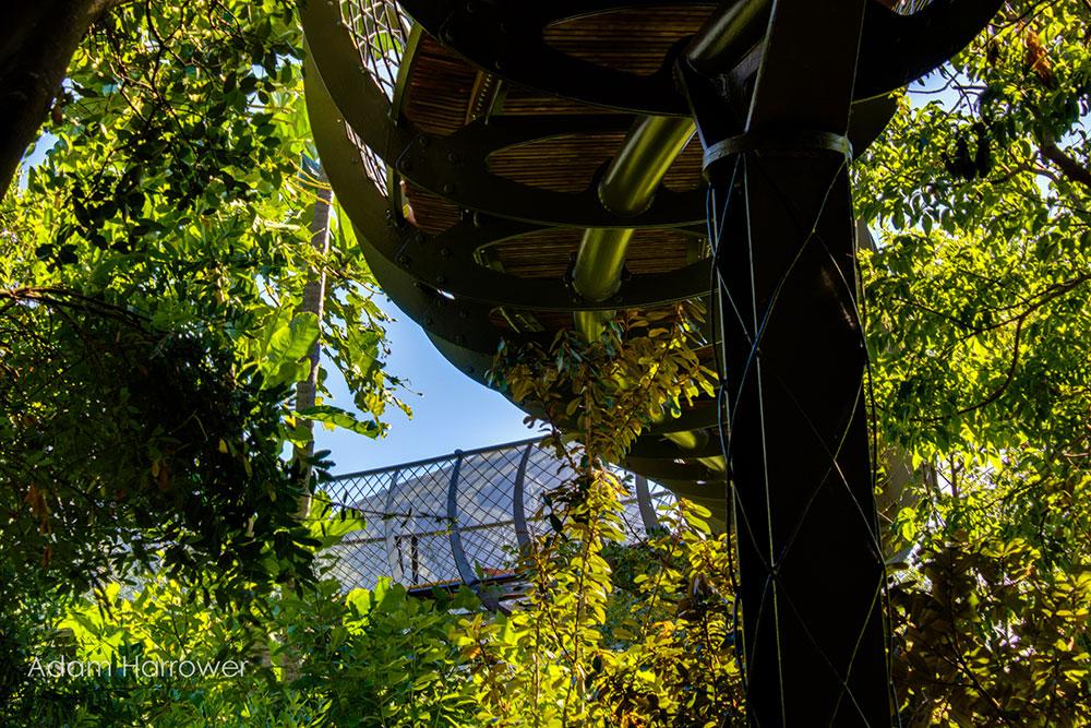 The Boomslang: Über allen Baumwipfeln ist Ruh