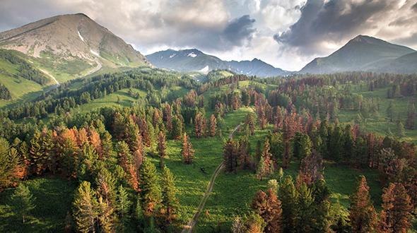 Kasachstan hat wunderschöne Wälder zu bieten.
