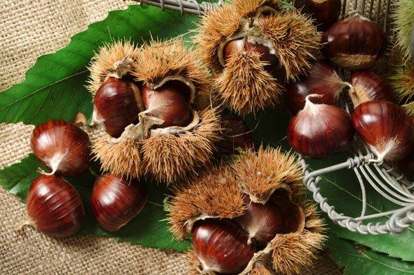 Esskastanien können bis zu drei Früchte in der Hülle haben