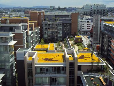 Intensive Oder Extensive Dachbegrünung. Vorteile In Bildern ... Intensive Extensive Dachbegrunung Nachhaltig