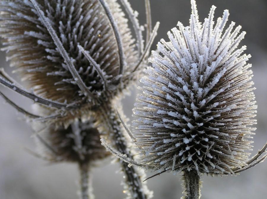 Zelt Für Pflanzen Im Winter : Bilder natur im winter und sein segen für die