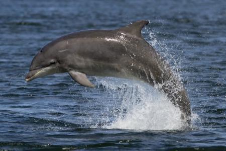 Wie der WDCS an der Nordseeküste Delfine erforscht und schützt. Faszinierende Naturaufnahmen