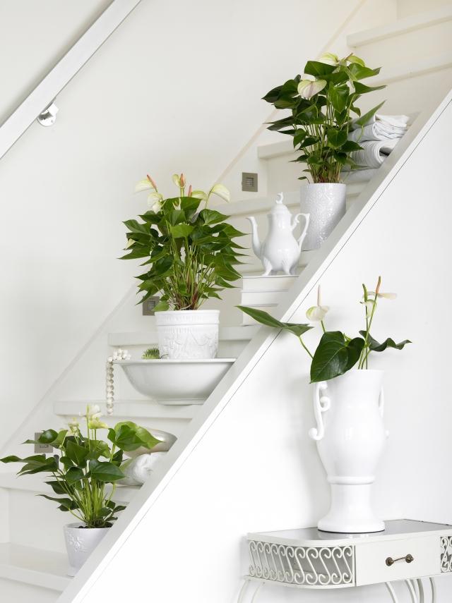 Zimmerpflanzen in bilder pflege tipps trends und for Zimmerpflanzen pflegeleicht