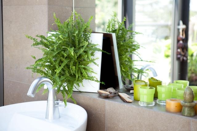 Wohnzimmer zimmerpflanze for Zimmerpflanzen wohnzimmer
