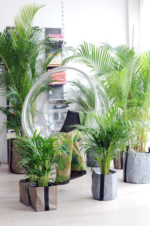 zimmerpflanzen nachhaltig gut f r raumklima gesund und entspannend. Black Bedroom Furniture Sets. Home Design Ideas