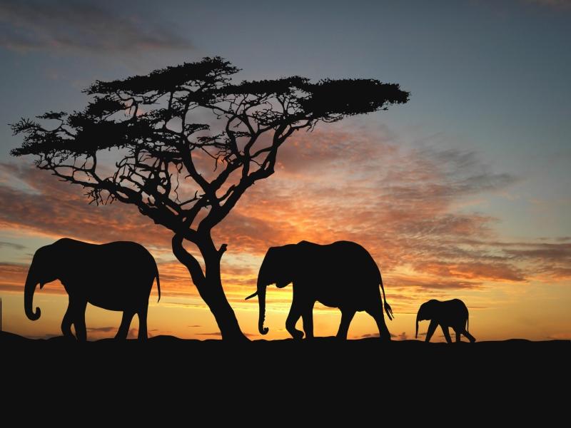 Ein glanzvolles Beispiel für nachhaltigen Tourismus in Afrika