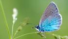 Unbeschwert und elegant - Der Schmetterling