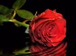 Schenken Sie Romantik (November)