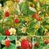 """Pflanzenpaket """"Erdbeeren satt"""""""
