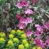 Pflanzenpaket (Wild)-bienenfreundliche Blüten für Halbschatten