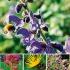 """Pflanzenpaket """"(Wild)Bienen-Weide"""""""