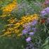 """Pflanzenpaket """"Bienenfutter"""" Herbstfreude für (Wild)Bienen"""