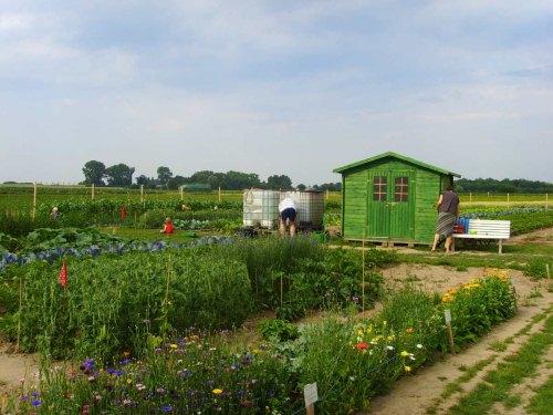 Biologisch Gärtnern Mit Mietgarten Von Meine Ernte Frische Salate Eigenen Garten Ernten
