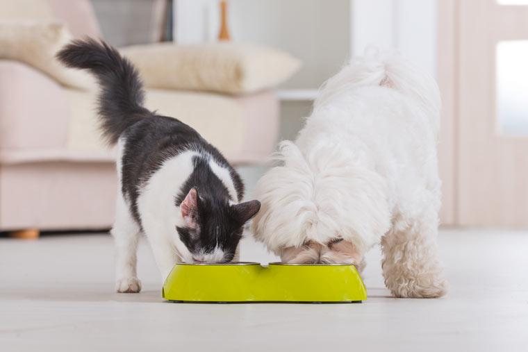 Gesundes Futter für Hund, Katze & Co.