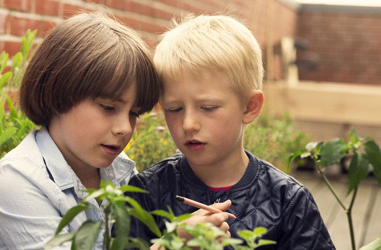 Sprout Stifte zum Einpflanzen