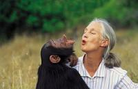 Jane Goodall Institut Deutschland e.V.