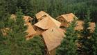 Urlaub im Baumhaus: Einmaliges und nachhaltiges Naturerlebnis